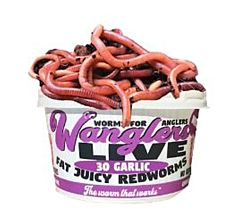 Garlic Redworms - Pack Of 48