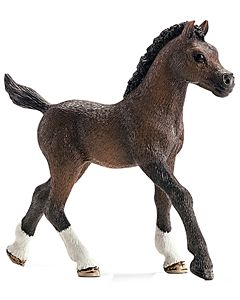 Kids Arabian Foal - 3 Yrs. Old And Above