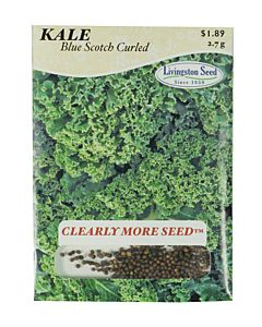 Blue Scotch Curled Kale Seed Packet - 2.7 g