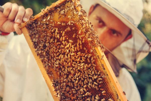 How to Maintain a Beehive