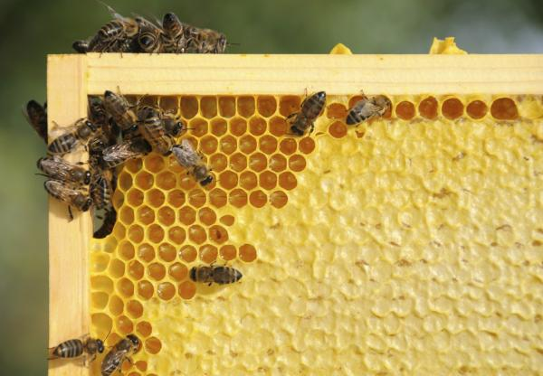 How to Set Up a Beehive