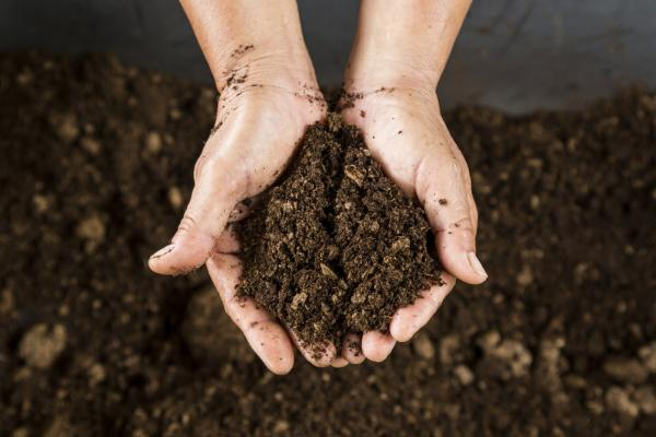 How To Prepare Your Soil For A Vegetable Garden