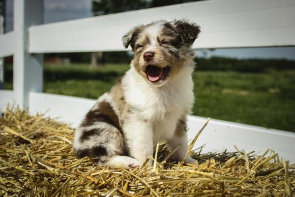 Puppy Food - How To Pick The Right One For Your New Family Member.