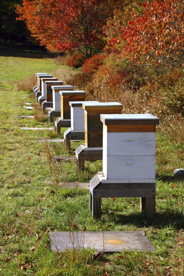 Everything You Need to Start Beekeeping