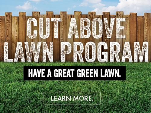 Cut Above Lawn Program