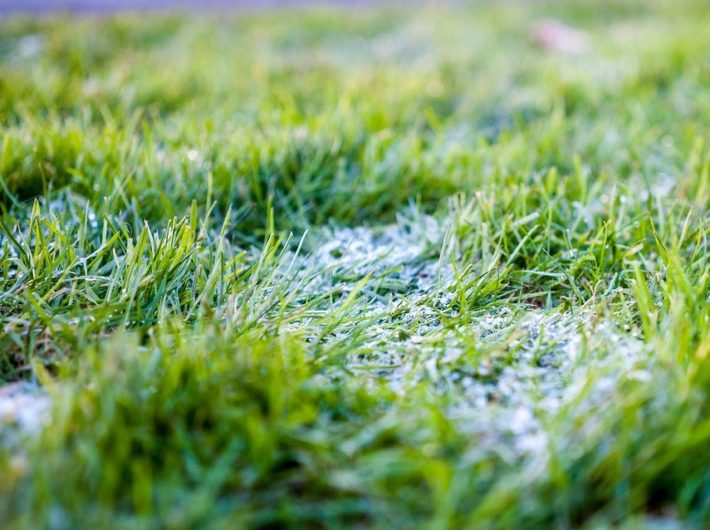 Fall Lawn Care for Southern States