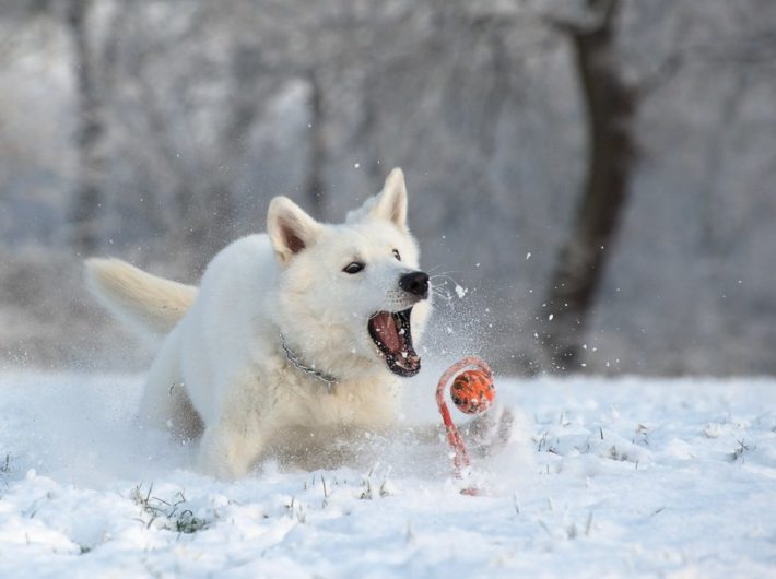 Exercising Your Dog in the Winter