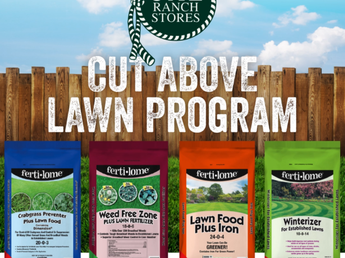 Cut Above Lawn Program