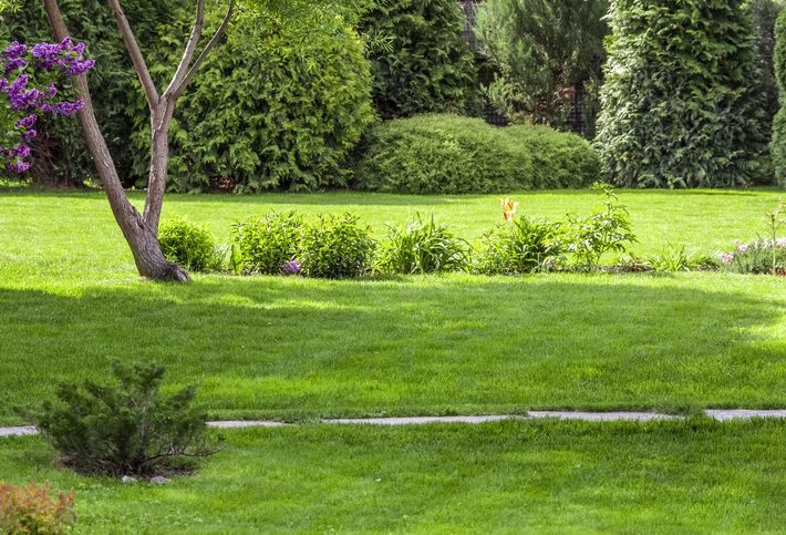 4-Steps to Take for a Healthy Spring Lawn